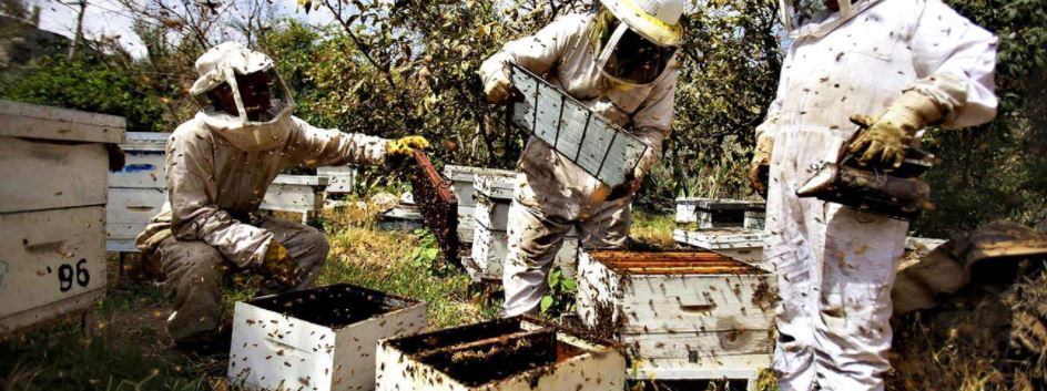 Australian bee hives