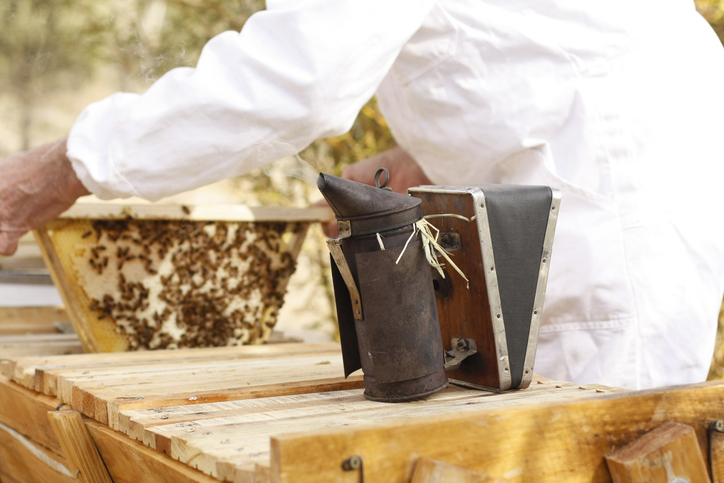 Australian farmer tending his bee hives