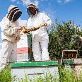 Australian beekeepers
