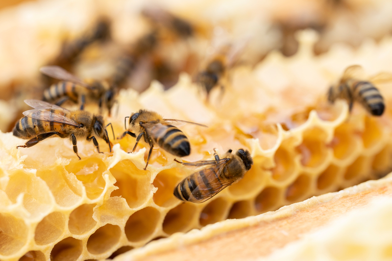 bees cope with heat very well