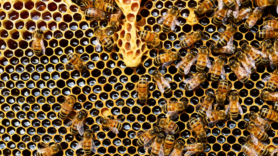 single cell hive